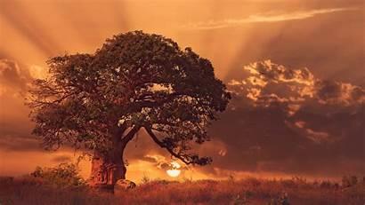 4k Tree Baobab Trees Sunset Landscape Nature