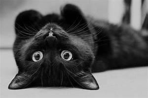 animal, b&,w, beau, black, black cat - image #276011 on ...