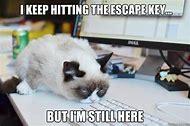 Grumpy Cat Meme Work
