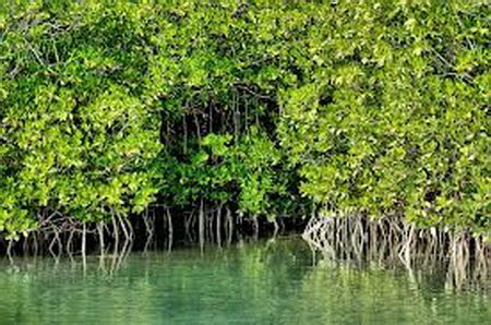 info mangrove eko wisata bali
