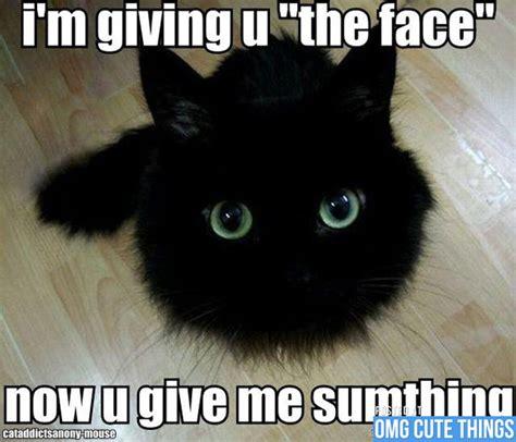 Cutest Memes - cute memes image memes at relatably com