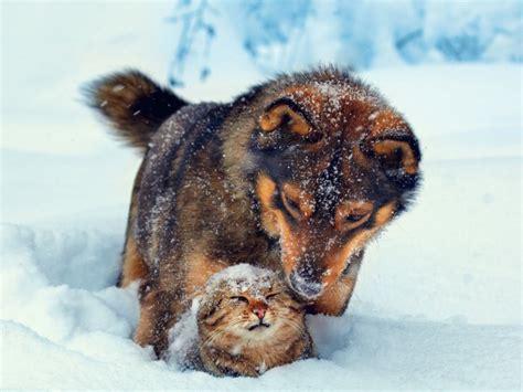 la amistad entre diferentes razas de animales rural