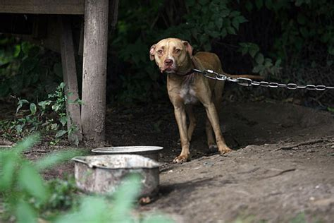 animal cruelty documentary hit  beagle   time
