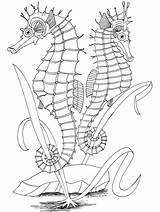 Coloring Ocean Pages Printable Fish Adults Seahorse Adult Realistic Drawing Zeepaardjes Animals Sea Sheets Oceans Horse Primarygames Bestcoloringpagesforkids Kleurplaten Scene sketch template