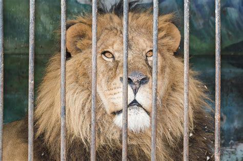 bocca di gabbia dietro la gabbia delle barre allo zoo immagine stock