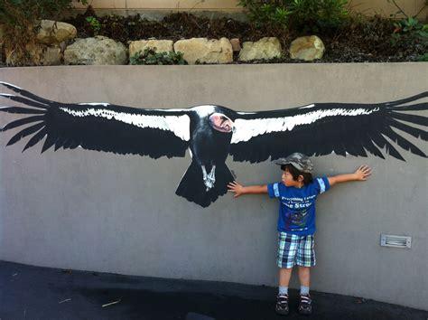Condor Bird Wingspan
