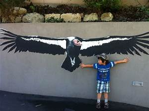 Condor Bird Wingspan