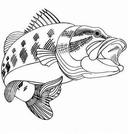 Bass Fish Coloring Pages Fishing Jumping Printable