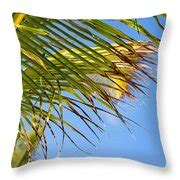 breezy palm fronds photograph  allan van gasbeck