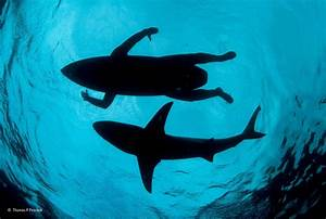 Nature Water Underwater Sea Animals Winner