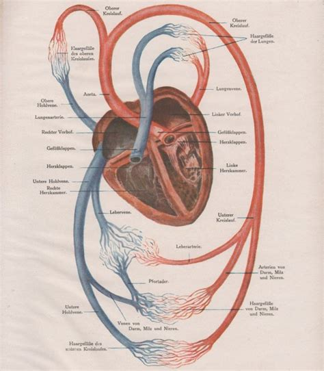 heart diagram templates sample  format