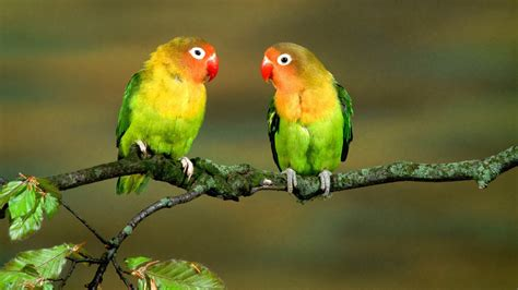 Cute Love Couple Birds