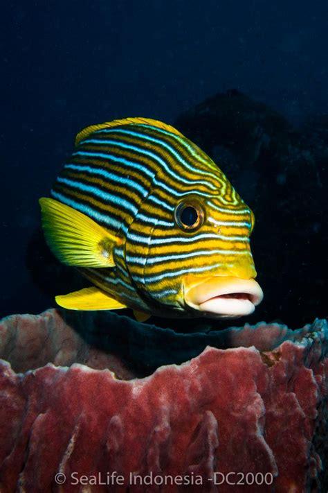 sealife dc underwater camera preview underwater