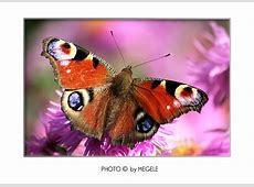 Tierbilder Tierfotos Bildarchiv für lizenzfreie Fotos