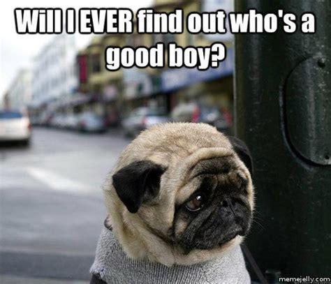 Sad Animal Memes - depressed animal memes image memes at relatably com
