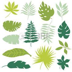 pin  sn koid  stencil collection leaf clipart