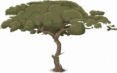Tree Trunk Nature Vector Branches Leaves Pixabay