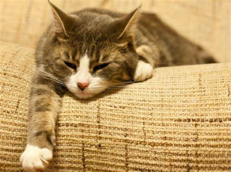 ohrmilben bei katzen symptome und behandlung