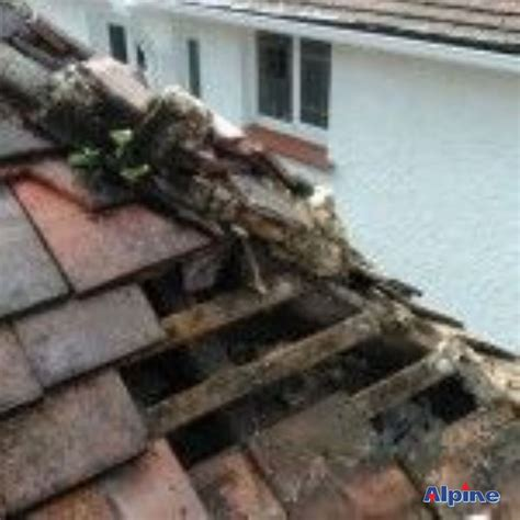alpine swansea roofing services  local swansea roofer