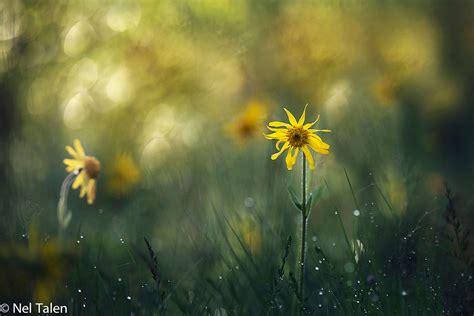callisia bloemen schaduw bloemen ajuga reptans asareum europaeum bergenia