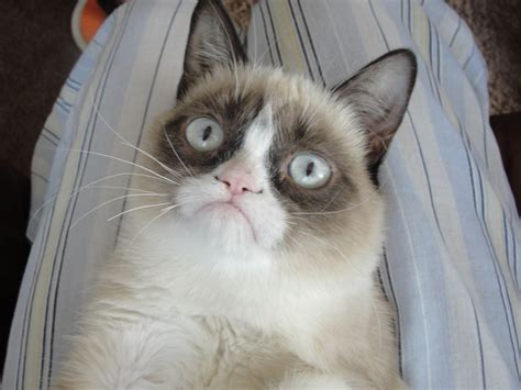 grumpy cat    iced coffee grumppuccino
