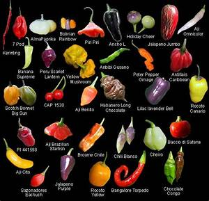 chile pepper pod types