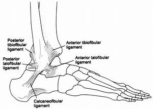 Foot And Ankle Ligament And Tendon Injuries