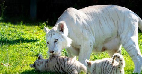 animales  estan en peligro de extincion  podrian