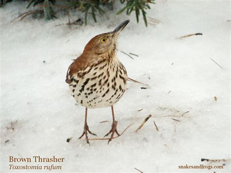 best 28 bird identification south carolina birds of