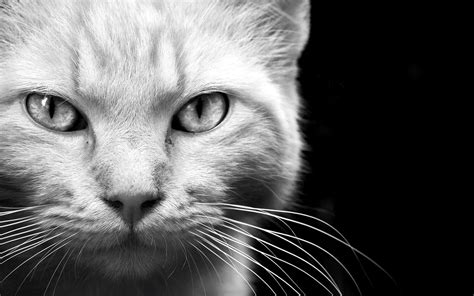 Black And White Animal Wallpaper - black and white animal wallpaper 183