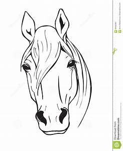 Pferdekopf Schwarz Weiß : schwarzweiss pferdekopf vektor abbildung illustration von ~ Watch28wear.com Haus und Dekorationen