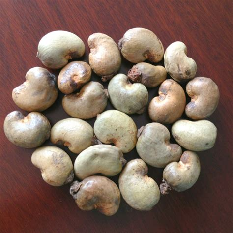 Raw Cashew And Cashew Kernels Specifications