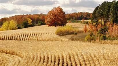 Harvest Moon Fall Autumn Corn Farm Field