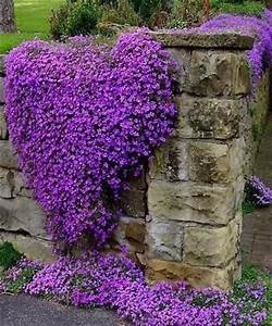 heart shaped purple flowers pictures photos and images With katzennetz balkon mit diamond garden outlet