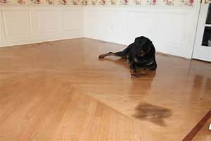 how to remove a pet stain from hardwood floors monk39s With stains on hardwood floors from pets