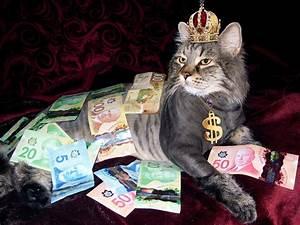 Katze Kotzt Viel : wie viel kostet eine katze pro monat katze ~ Frokenaadalensverden.com Haus und Dekorationen