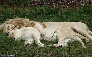 Pic captured the Lions in love sleep tonight
