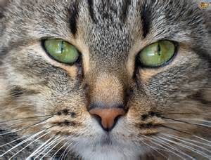 cat nose interesting facts about a cat s nose pets4homes