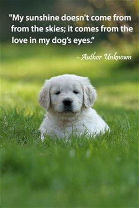 loyal dog quotes quotesgram