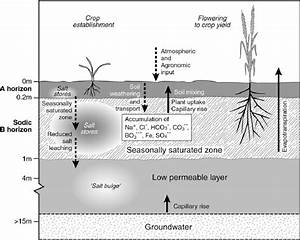 Soil Processes And Accumulation Of Salt In Root Zone