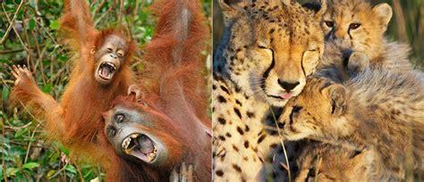la vitrine des animaux le livre de la jungle top 20 des animaux de la jungle les plus mignons 20 photos