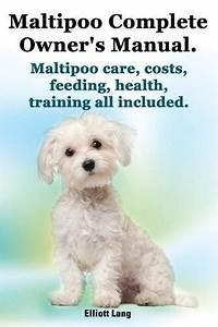 Black Maltipoo Puppies For Sale   Black Maltipoo Puppies