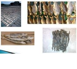dry fish dry cashimara suppliers traders manufacturers