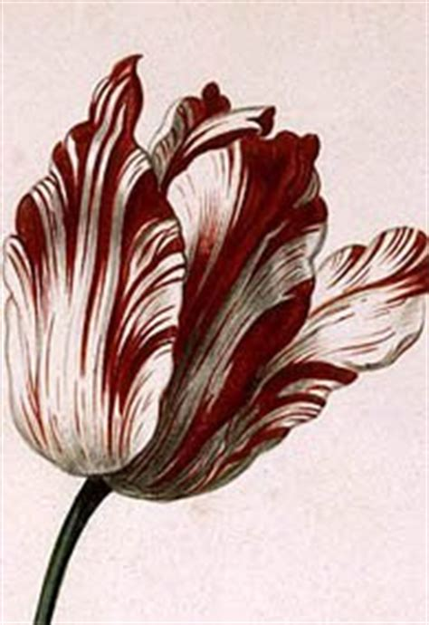 lost tulips of the golden age semper augustus and