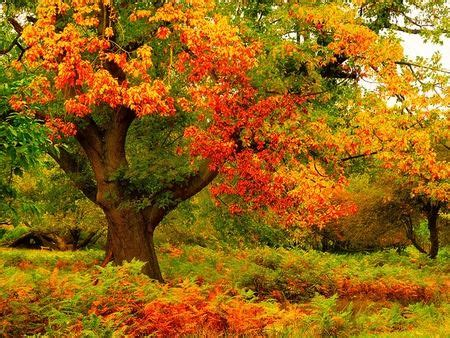 beautiful colorful nature xcitefunnet