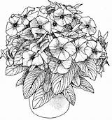 Coloring Pages Adults Flower Printable sketch template
