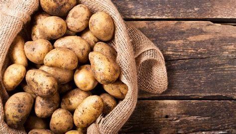 Kartoffeln Lagern Tontopf by Kartoffeln Lagern So Bleiben Sie Am L 228 Ngsten Frisch