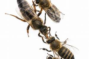 Learn From These 5 Ways Bees Work Together