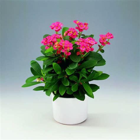 piante da appartamento con fiori fiori da appartamento piante appartamento come