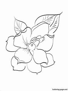 Gardenia Coloring Page For Free Coloring Pages